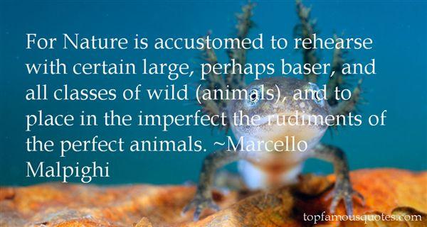 Marcello Malpighi Quotes