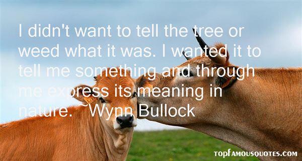 Wynn Bullock Quotes