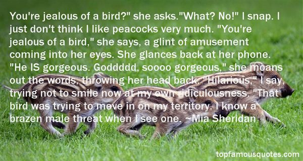 Quotes About Peacock