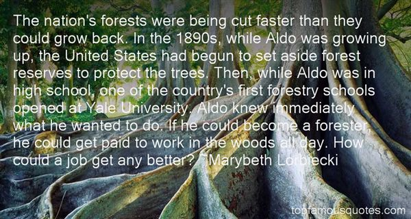Quotes About Forestry