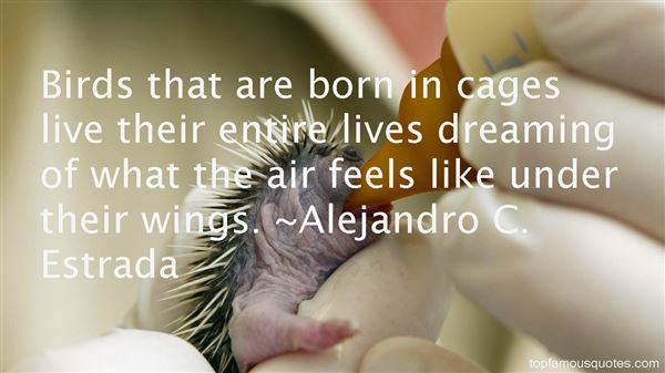Quotes About Birds In Cages