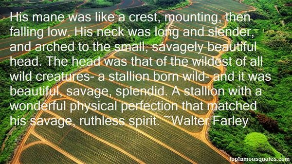 Quotes About Stallion