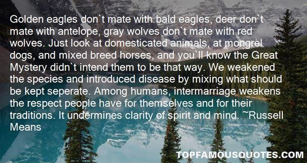 Quotes About Bald Eagles