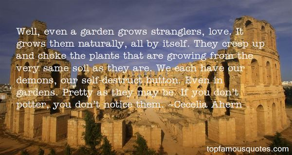 Quotes About Love Grows