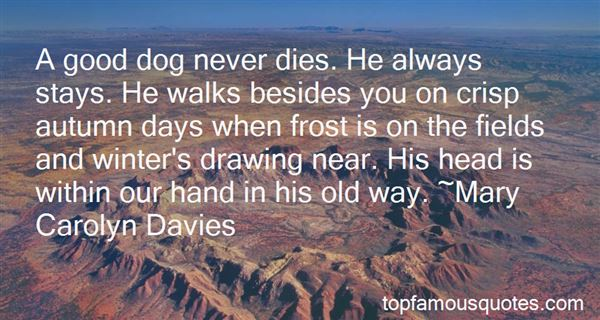 Quotes About Dog Walks