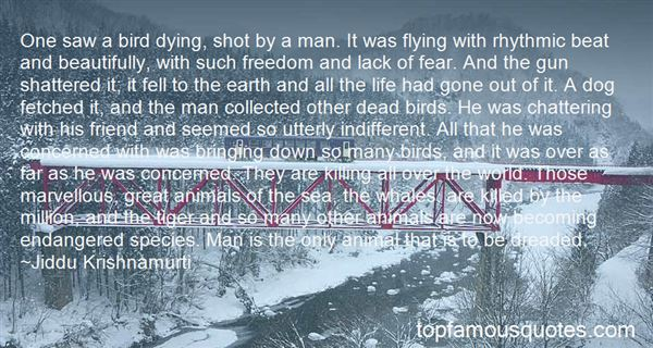 Quotes About Flying And Freedom